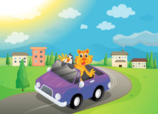 Animals in car Royalty Free Stock Photo