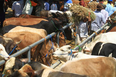 Animals Cattle Trade Stock Photos