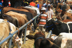Animals Cattle Trade Royalty Free Stock Photos