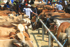 Animals Cattle Trade Stock Images