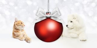 Animals christmas theme, cat and dog with red ball and silver sa Royalty Free Stock Photo