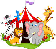 Animals in circus cartoon Stock Image
