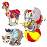 Animals from circus, llama, elephant, rhinoceros Royalty Free Stock Images