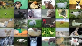Animals collage with potamochoerus, otter, wallaby, maned and grey wolf, capybara, elephant, red panda,