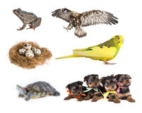 Animals. The collection of animals in isolation on white background stock image