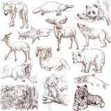 Animals 1. Collections of hand drawn illustrations isolated on white - animals around the world Royalty Free Stock Photography