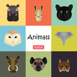 Animals color flat set on color background Stock Photos