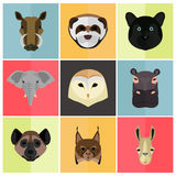 Animals color flat set on color background Royalty Free Stock Photography