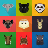Animals color flat set on color background Royalty Free Stock Photo