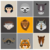 Animals color flat set on color background Stock Photography