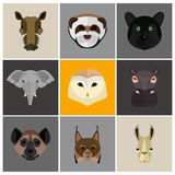Animals color flat set on color background Stock Image
