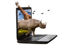 Animals Coming Out of a Laptop Screen. Rhinoceros, giraffe, squirrel and birds coming out of a laptop screen isolated on a white background Royalty Free Stock Images