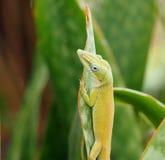 Animals Of Cuba Stock Photo