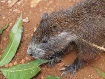 Animals Of Cuba Stock Image