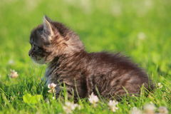 Animals. Cute gray kitten in the grass stock images