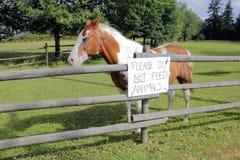 animals do feed όχι παρακαλώ Στοκ Φωτογραφίες