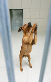 Animals dog Stock Photos