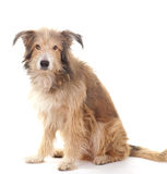 Animals: dog Royalty Free Stock Images