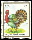 Animals, Domesticated Turkey. Fujairah - stamp printed 1972, Multicolor Memorable issue of offset printing, Topic Fauna and Mammals, Series Animals, Domesticated Stock Photo