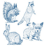 Animals drawings set. Isolated on white background: squirrel, hare, puppy, raccoon stock illustration