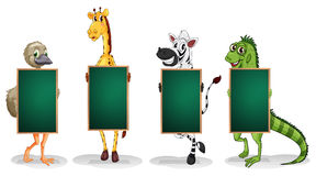 Animals with empty blackboards Royalty Free Stock Images