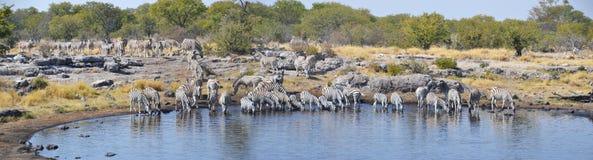 Animals in Etosha National Park. Etosha National Park is a national park in northwestern Namibia Royalty Free Stock Images
