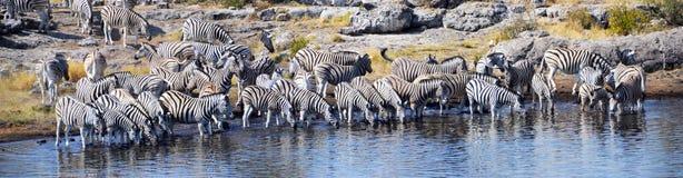 Animals in Etosha National Park. Etosha National Park is a national park in northwestern Namibia Stock Photos