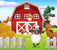 Animals at the farm with a barnhouse Royalty Free Stock Photo