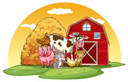 Animals farm Royalty Free Stock Photo