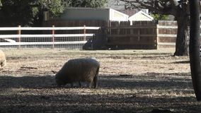 Animals in a farm stock footage