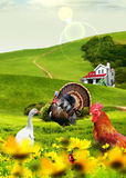 Animals in field. Illustration for adventure. Collage creted in photoshop Stock Images