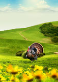 Animals in field Royalty Free Stock Images