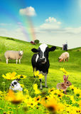 Animals in field 2. Illustration for adventure. Collage creted in photoshop Stock Photo