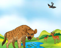 Animals and field. Hyena and deers around the pond at daytime Royalty Free Stock Image