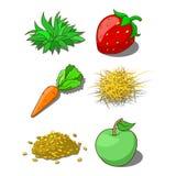 Animals food corn grass hay carrot Royalty Free Stock Photos