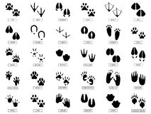 Free Animals Footprints. Animal Feet Silhouette, Frog Footprint And Pets Foots Silhouettes Prints Vector Illustration Set Royalty Free Stock Photography - 142245737