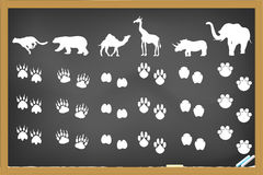 Animals footprints on blackboard Royalty Free Stock Image