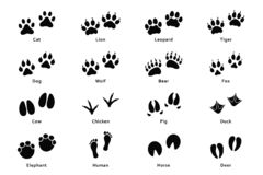 Animals footprints, paw prints. Set of different animals and birds footprints and traces vector illustration
