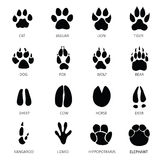 Animals footprints. Paw white background Stock Images