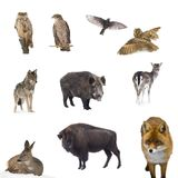 Animals forest Royalty Free Stock Photo