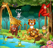 Animals and forest Stock Image