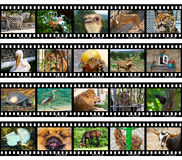 Animals in frames of film. (my photos) isolated on white background Stock Images