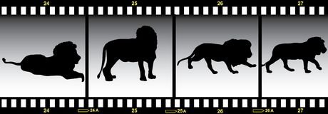 Animals in frames of film. Lion in frames of film Stock Photography