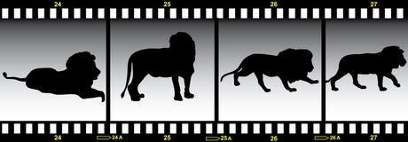 Animals in frames of film. Lion in frames of film stock illustration