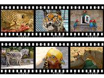 Animals in frames of film Royalty Free Stock Photos