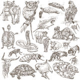 Animals - Freehand sketching, pack Royalty Free Stock Photos