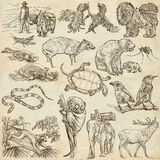 Animals - Freehand sketching, pack Stock Photos