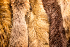 Animals fur Royalty Free Stock Photography