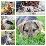 Animals in the garden. Collage with animals and children in the garden Stock Photos