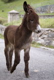 Animals in genere Stock Photos